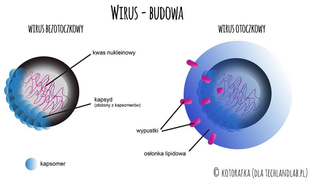 budowa wirusa a dezynfekcja