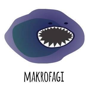 makrofagi - odporność