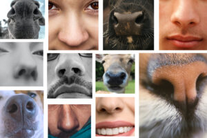 zapachy, węch, nos