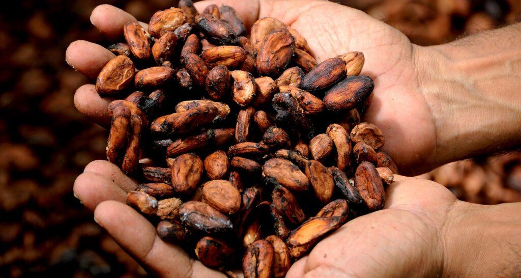 kakaowiec, ziarna